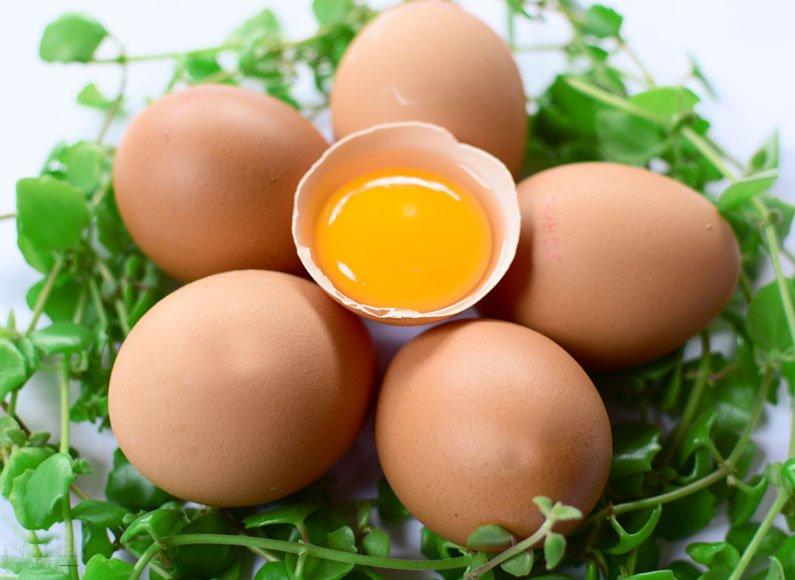 Bài thuốc trị thận yếu từ trứng gà và sinh địa hoàng
