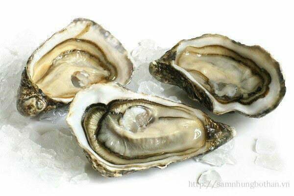 Nam giới nên ăn hàu biển trị xuất tinh sớm